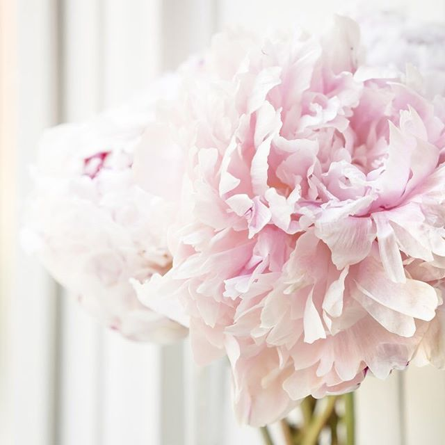 What do you do to brighten your space or mood? Here are my top 3 favs 🌸 I love peonies. I put those beauties everywhere. 🍊Essential oils diffusing are a must. Bergamont, is life. 🍵 Matcha. All the matcha.  What about you!?