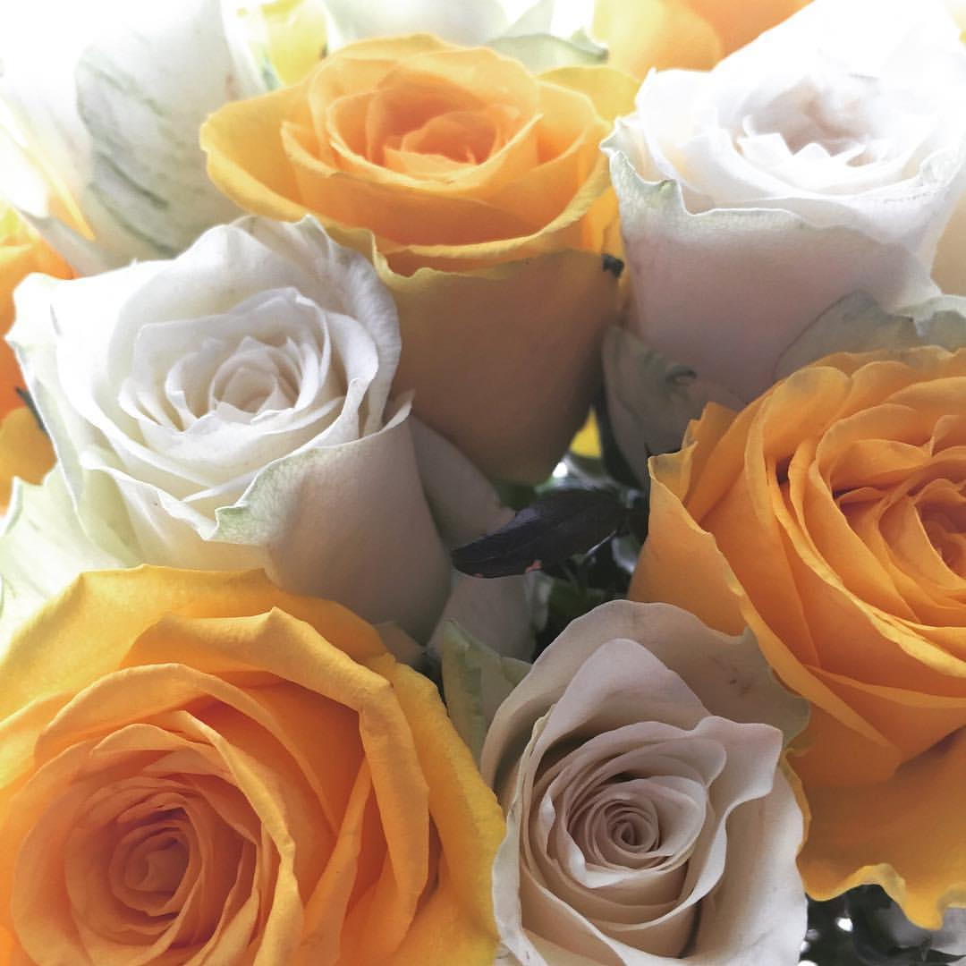 Yellow and White Roses.jpg