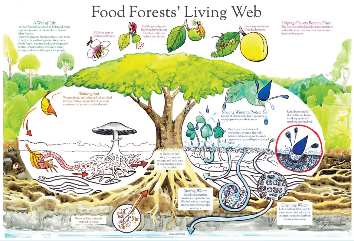 Food-Forest-Living-Web-1170x797.jpg