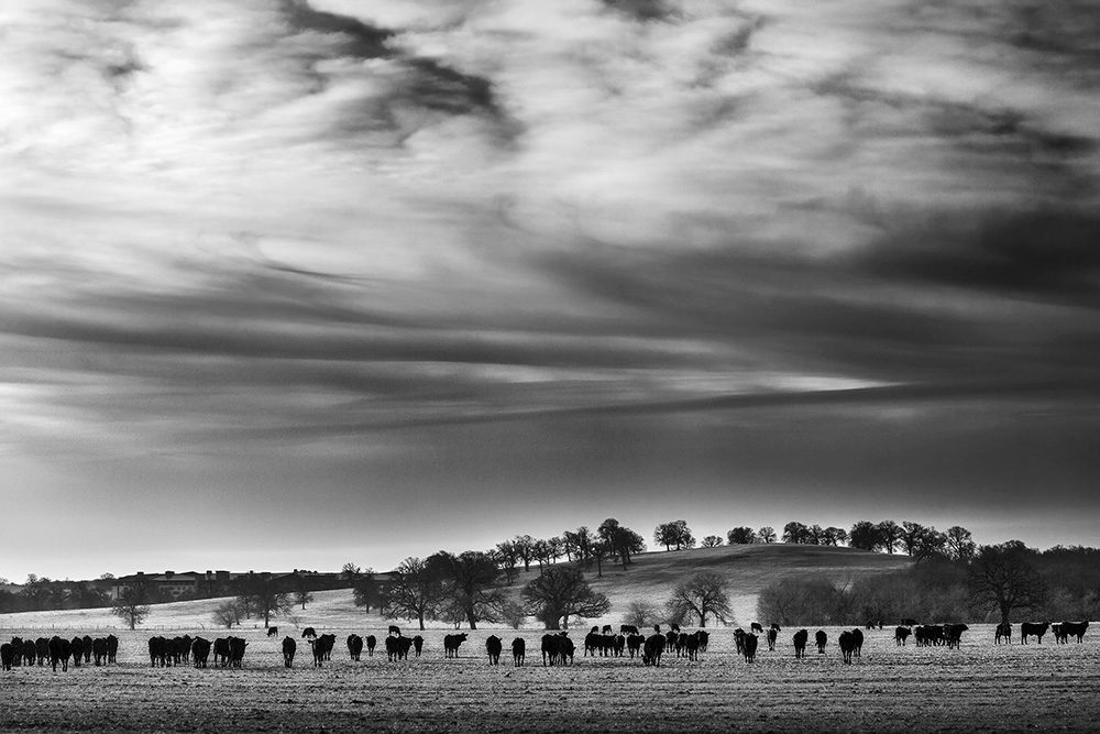 Herd web.jpg