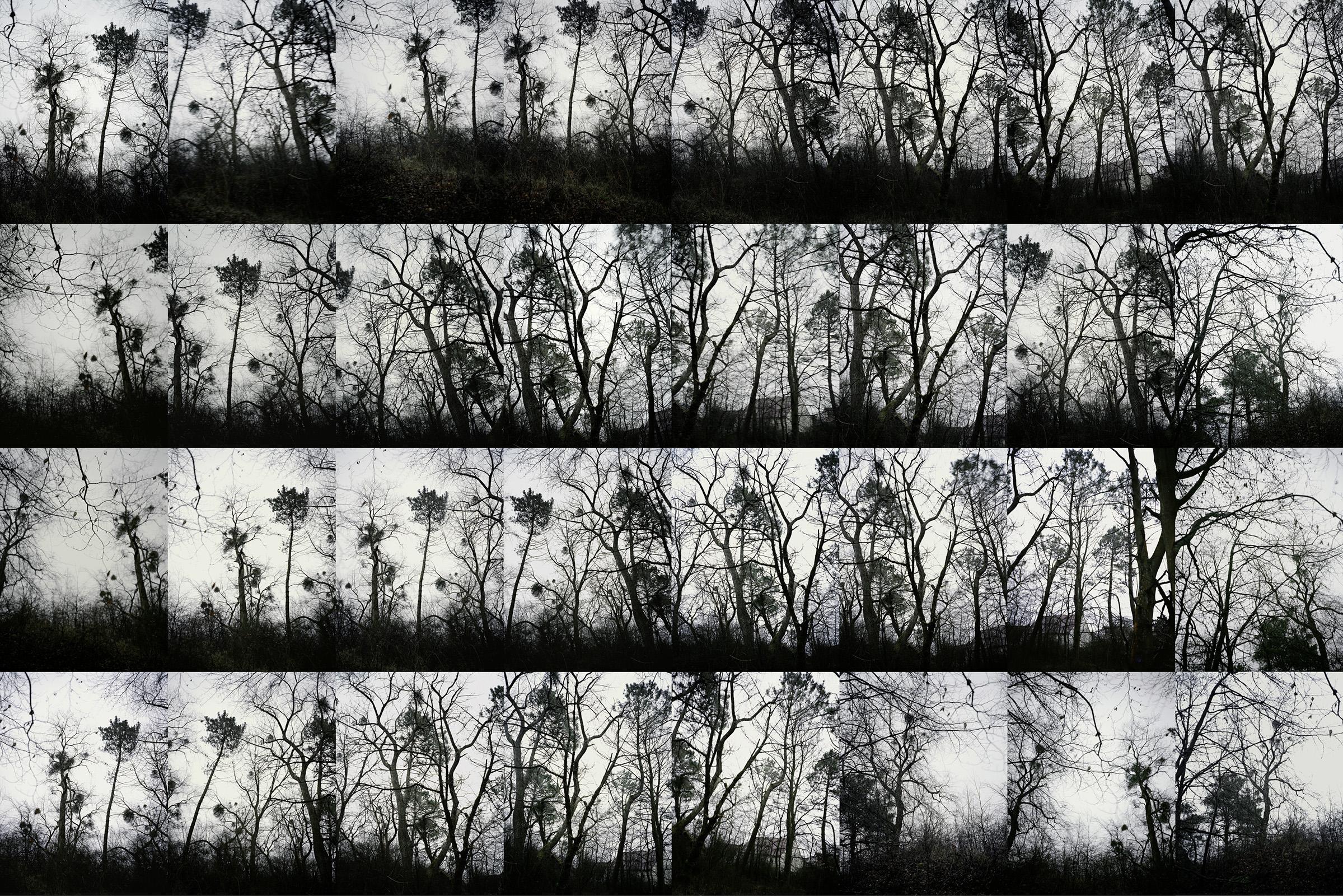 Block-arbres-japonais.jpg