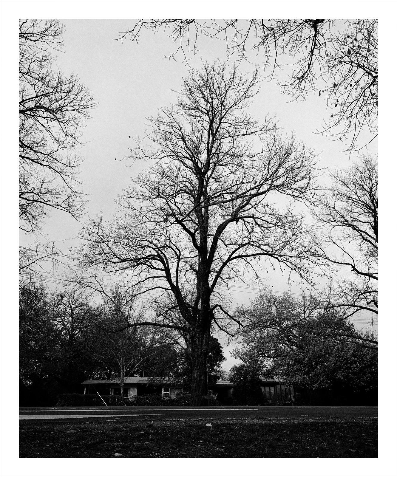 Tree 81 Greenwood.jpg