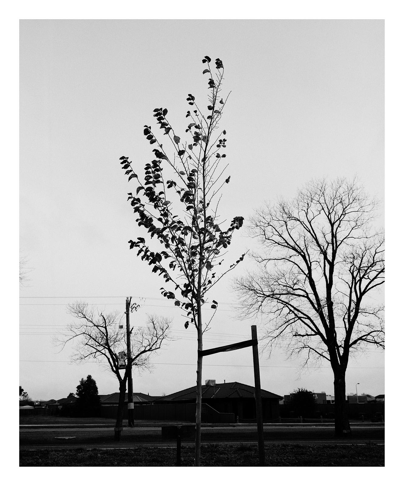 Tree 338 Mounsey.jpg