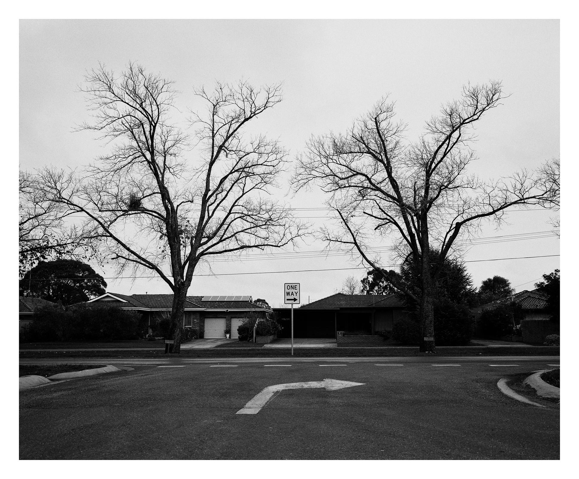 Tree 277 Marsh.jpg