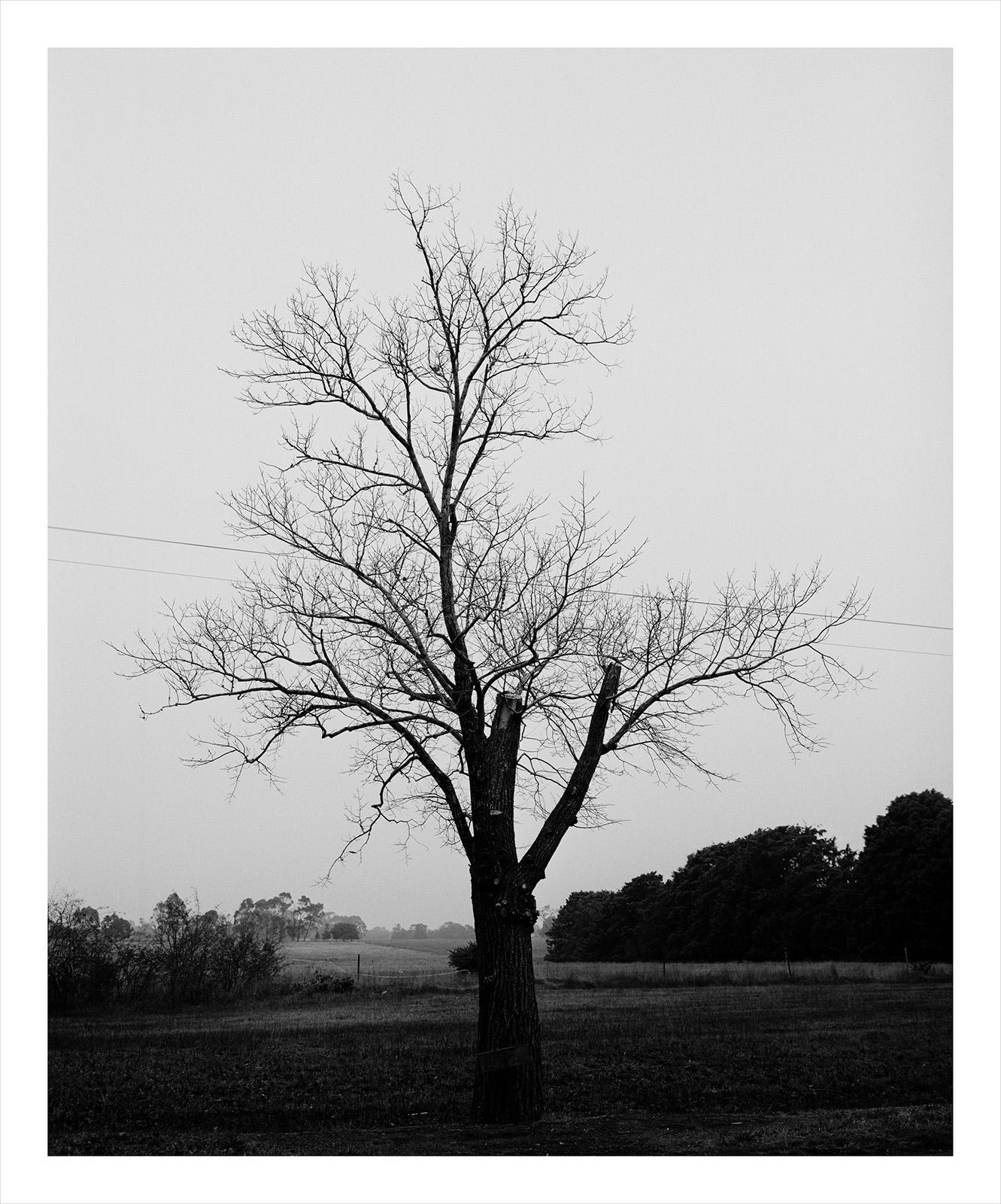 Tree 1044 McCrae.jpg