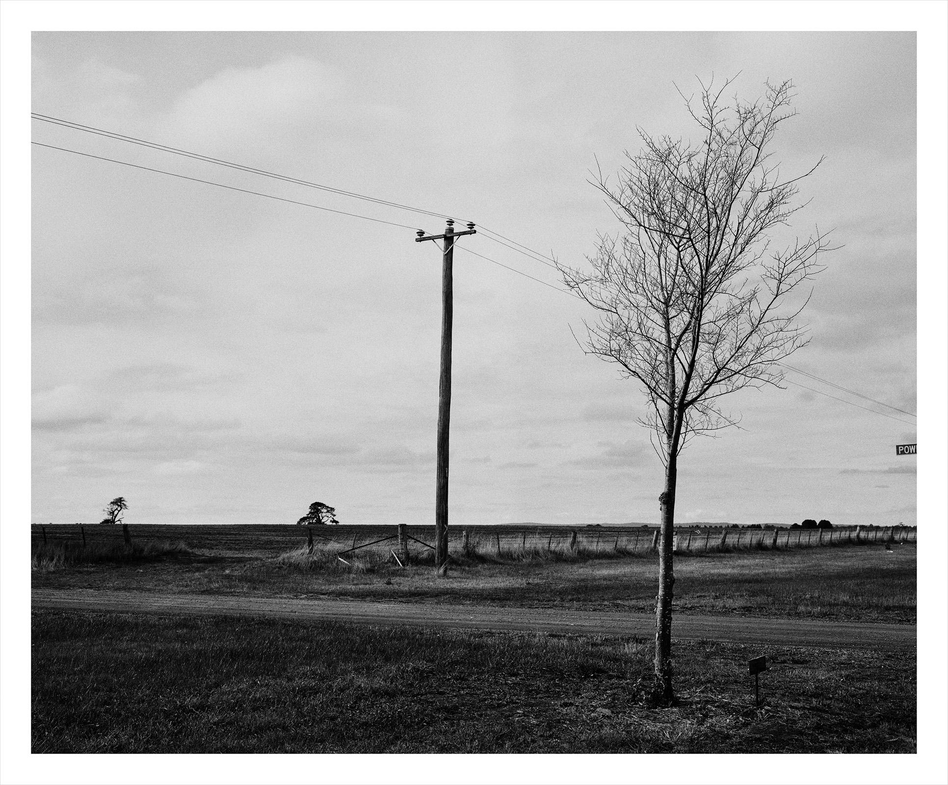 Tree 1872 Walker.jpg