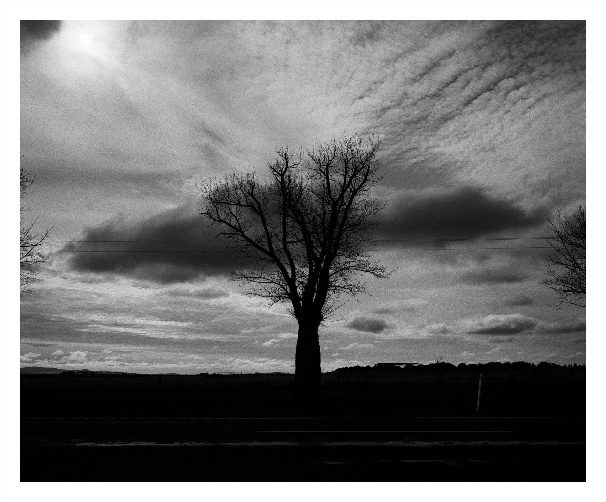 Tree 1926 Taylor.jpg