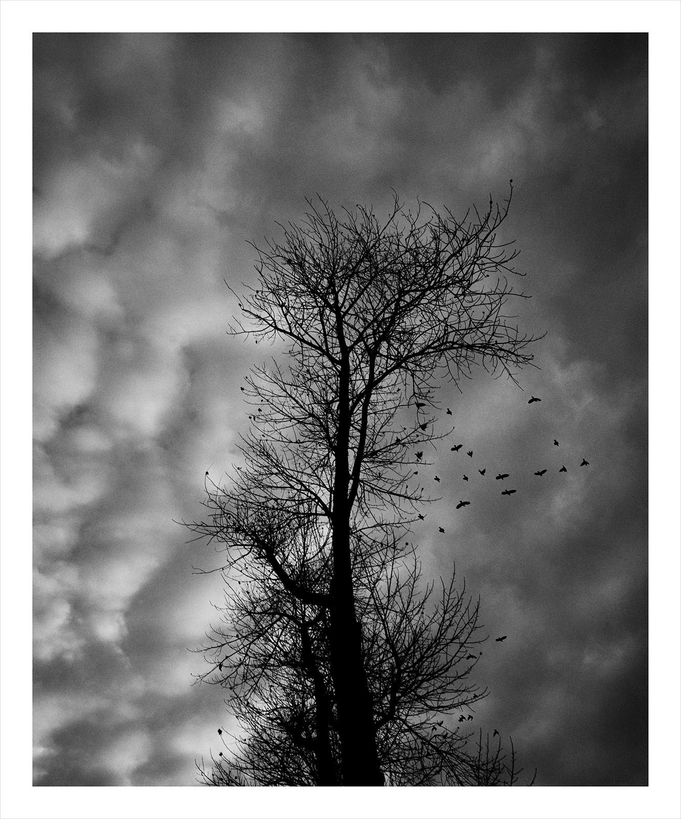 Tree 2066 Granland.jpg