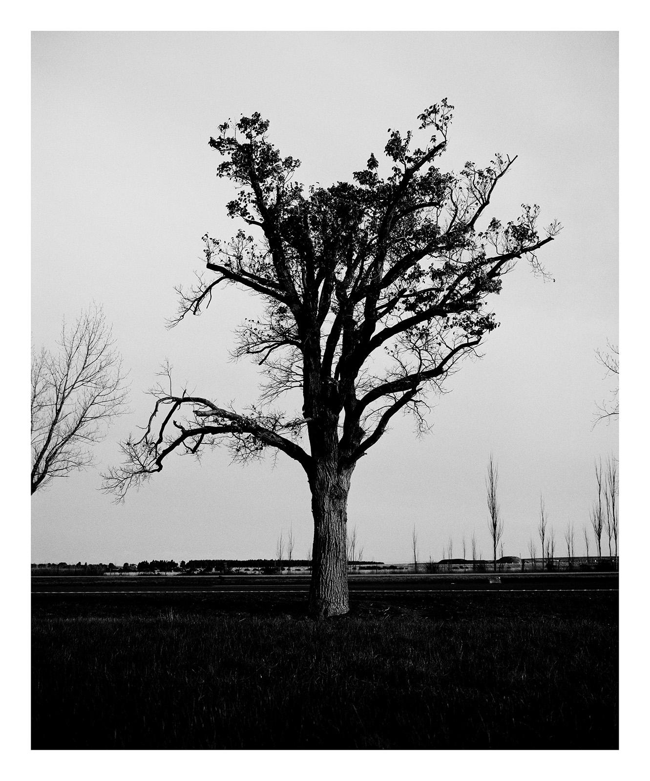 Tree 1978 Wunhym.jpg