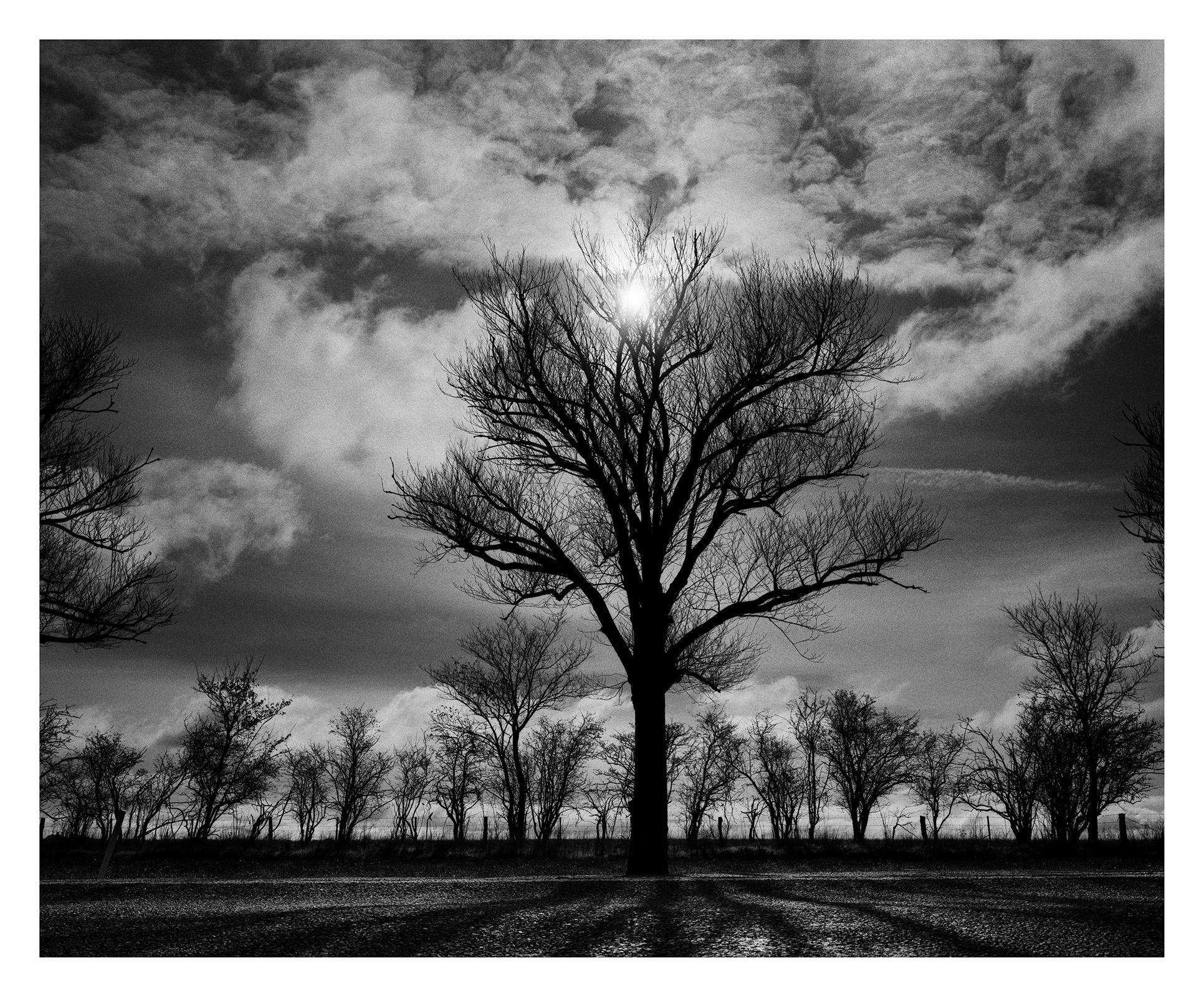 Tree 2532 Willis.jpg