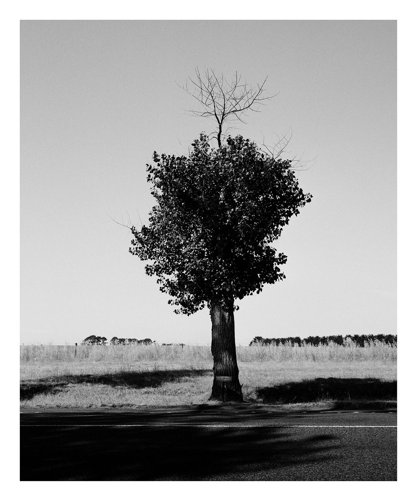 Tree 2766 Jones_ Summer.jpg