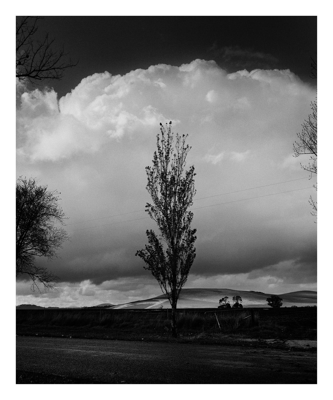 Tree 3490 Allen.jpg