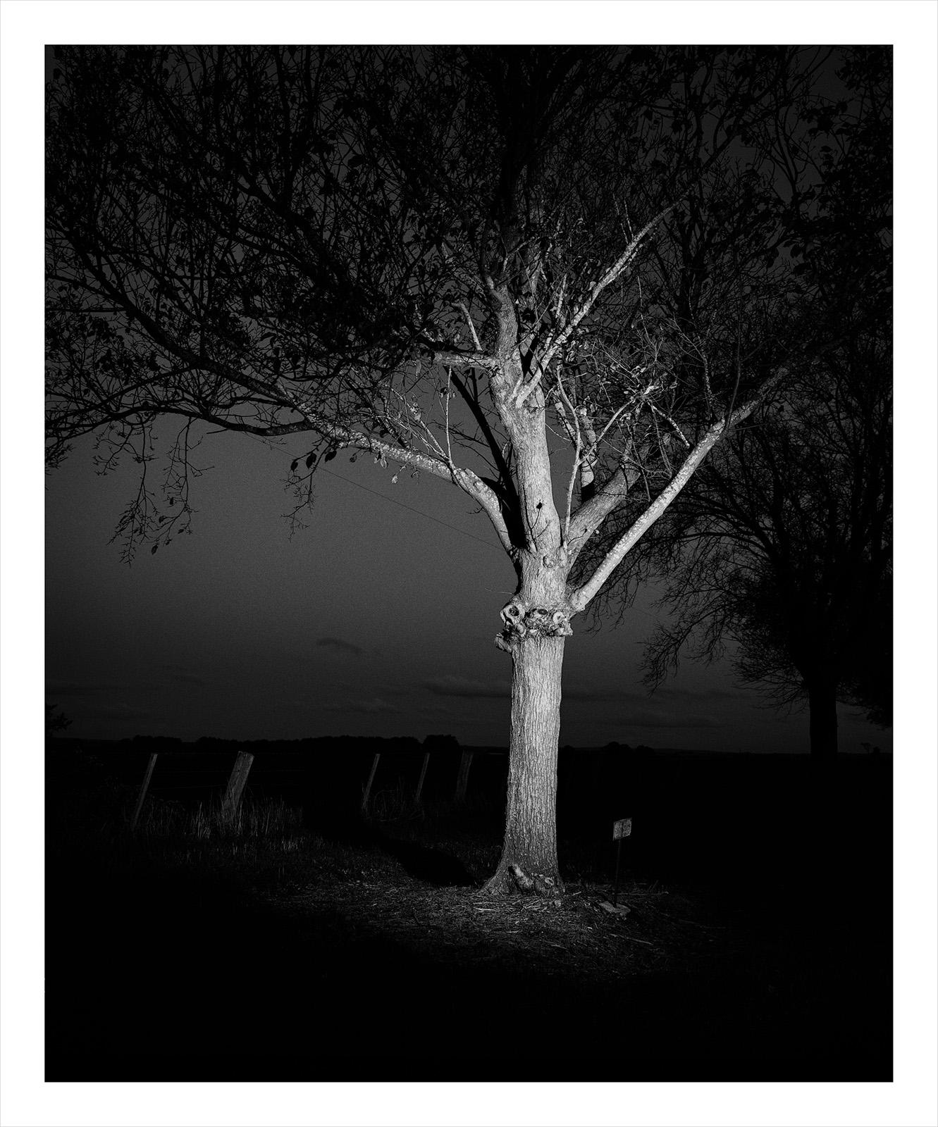 Tree 3482 McGregor.jpg