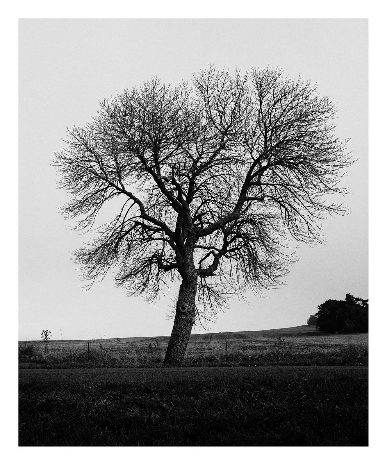Tree 3591 Huggins.jpg
