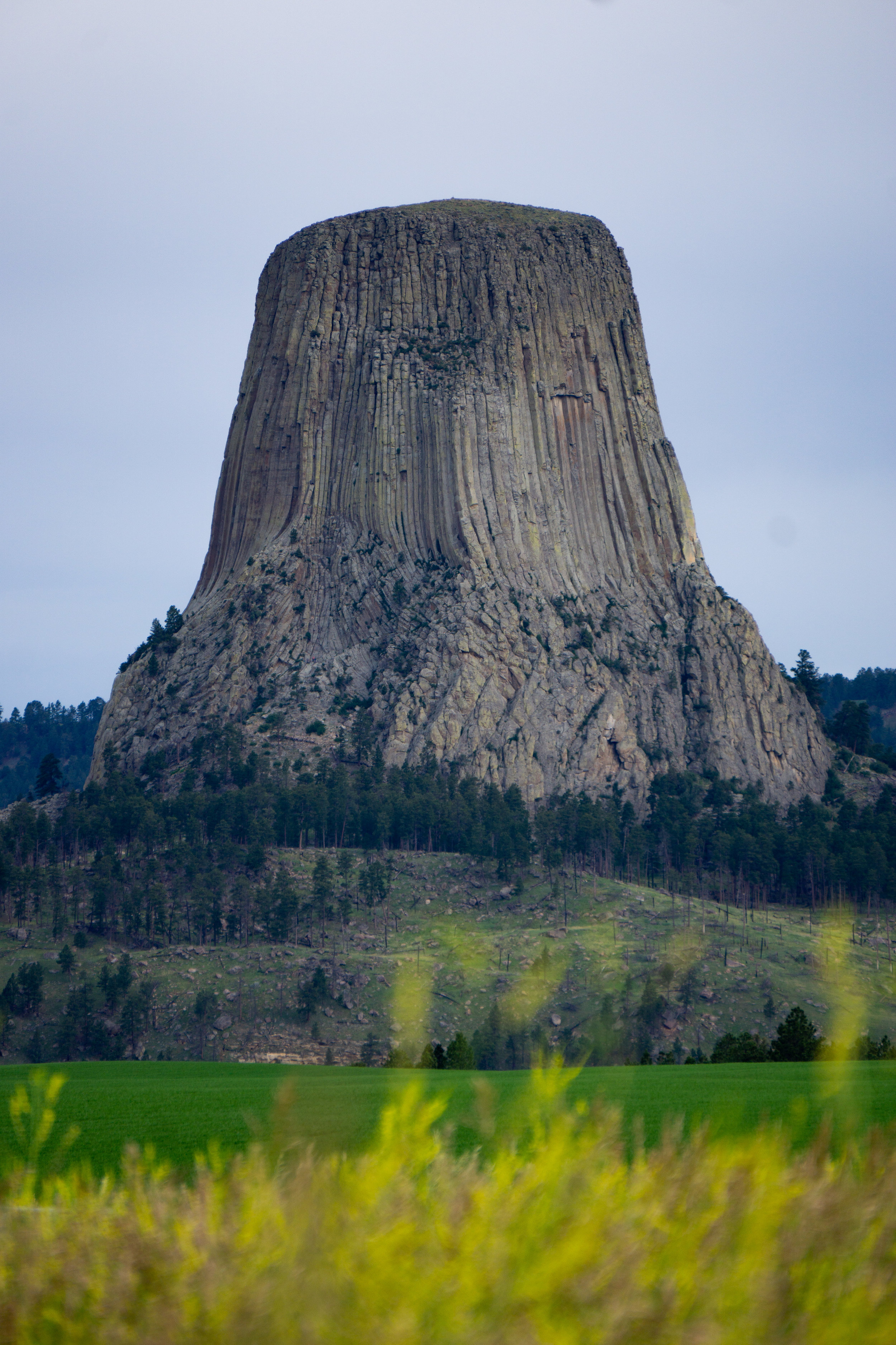 Devils tower with flowers.jpg