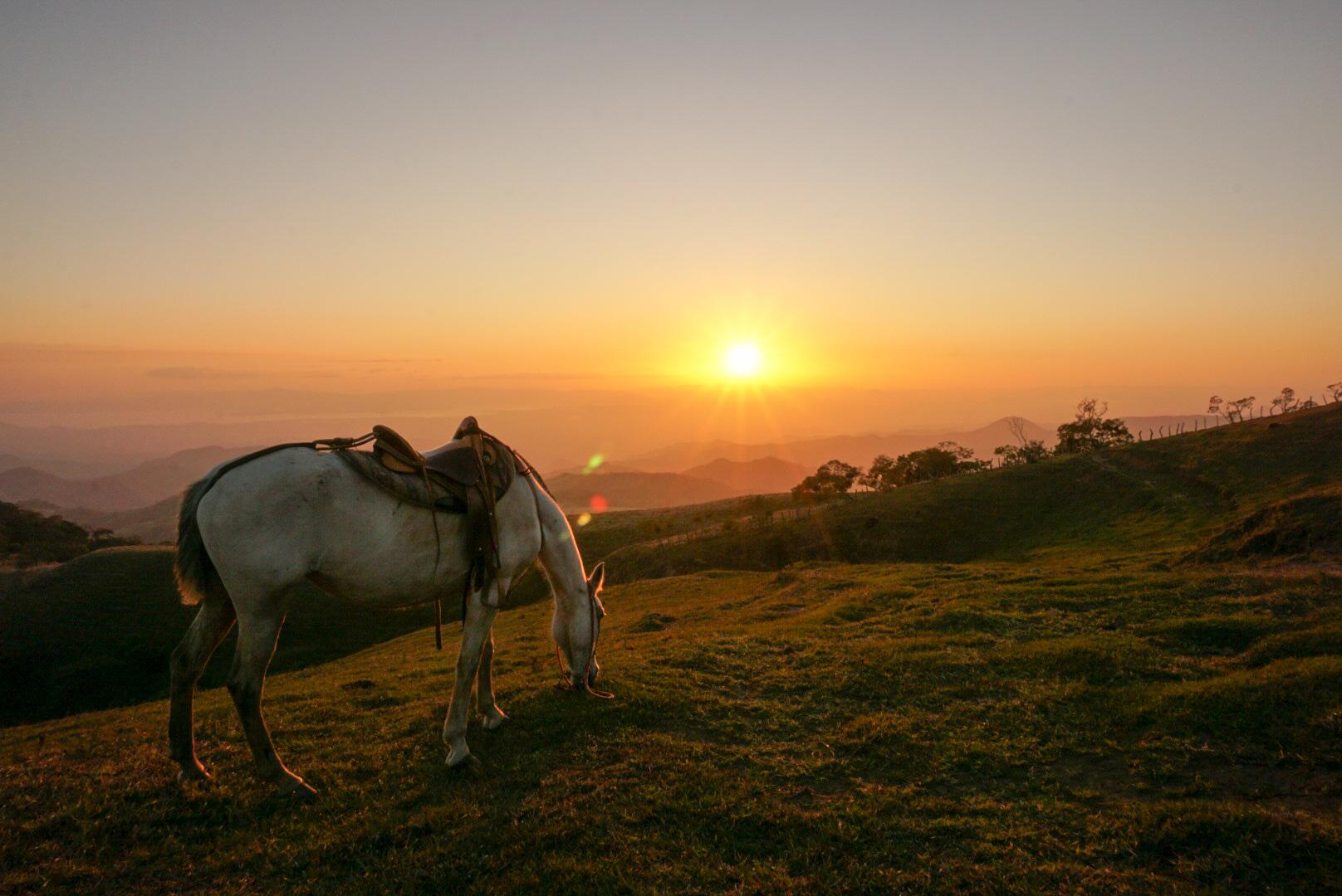 Costa Rica horse and sunset.jpg