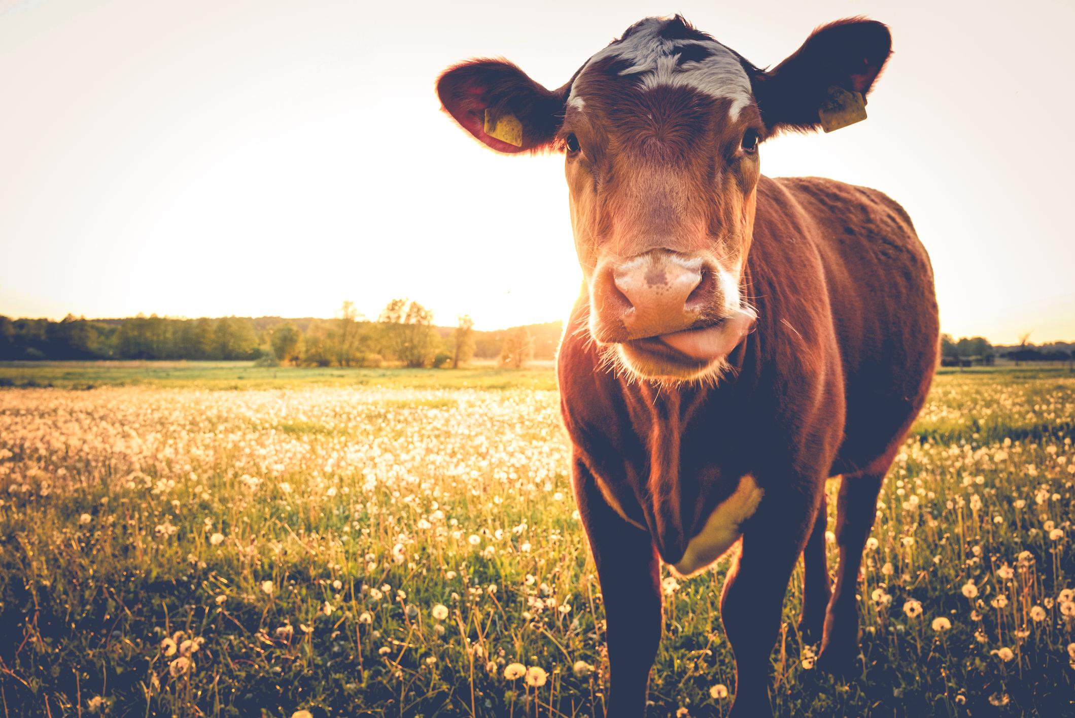 TRENGER FÔR ! - Klikk på bildet for å registrere ditt fôrbehov.