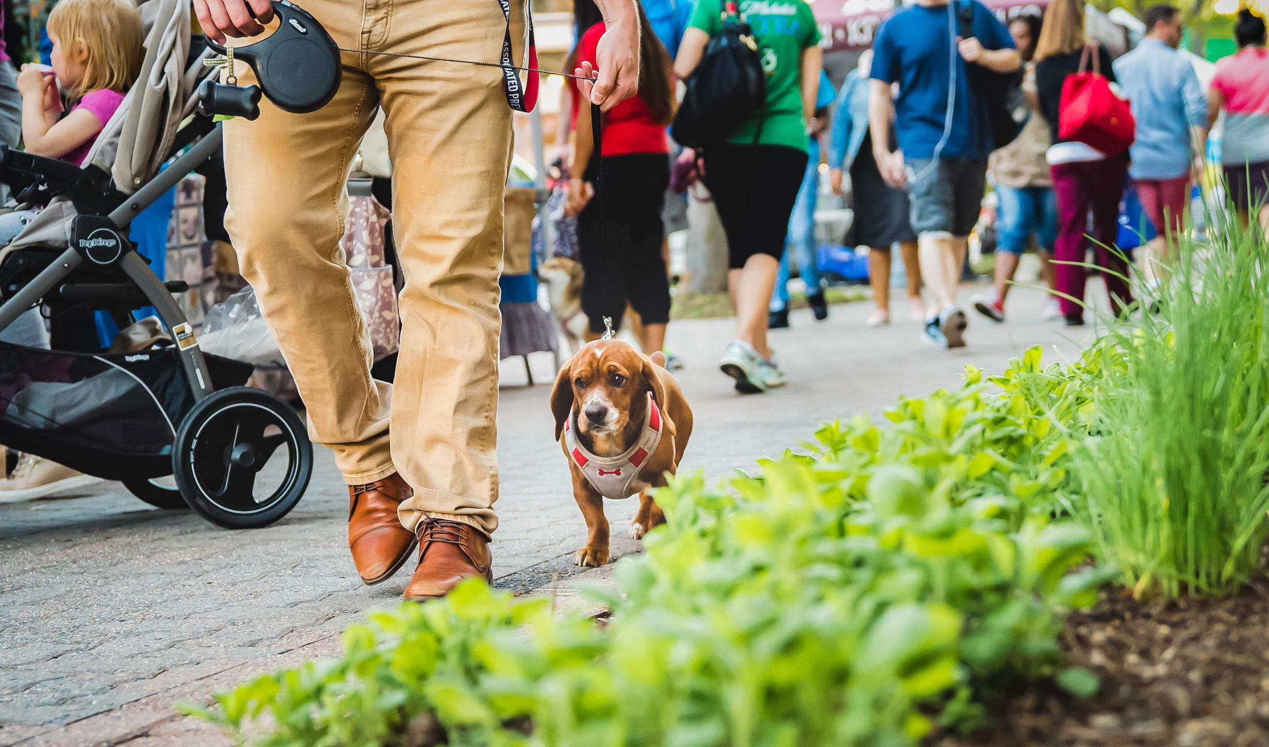 ElyseesEye-Dog-1.jpg