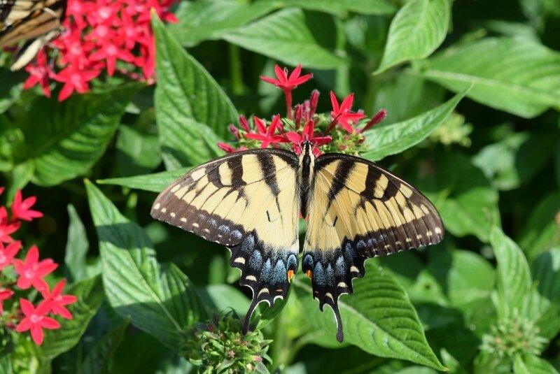 butterfly-3-gibbs-garden-atlanta.jpg