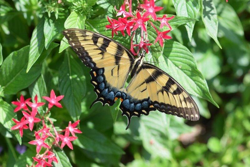 butterfly-gibbs-garden-atlanta.jpg