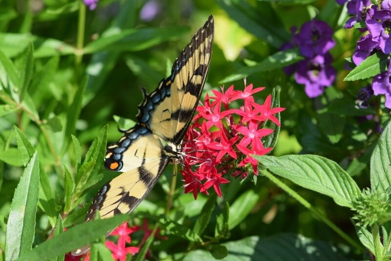 butterfly-2-gibbs-garden-atlanta.jpg