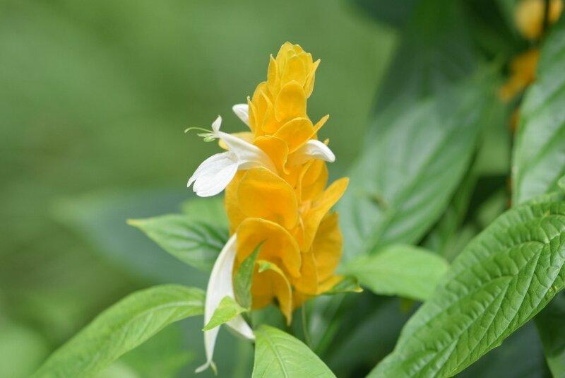 yellow-flower-gibbs-garden-atlanta.jpg