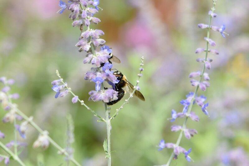 bee-gibbs-garden-atlanta.jpg