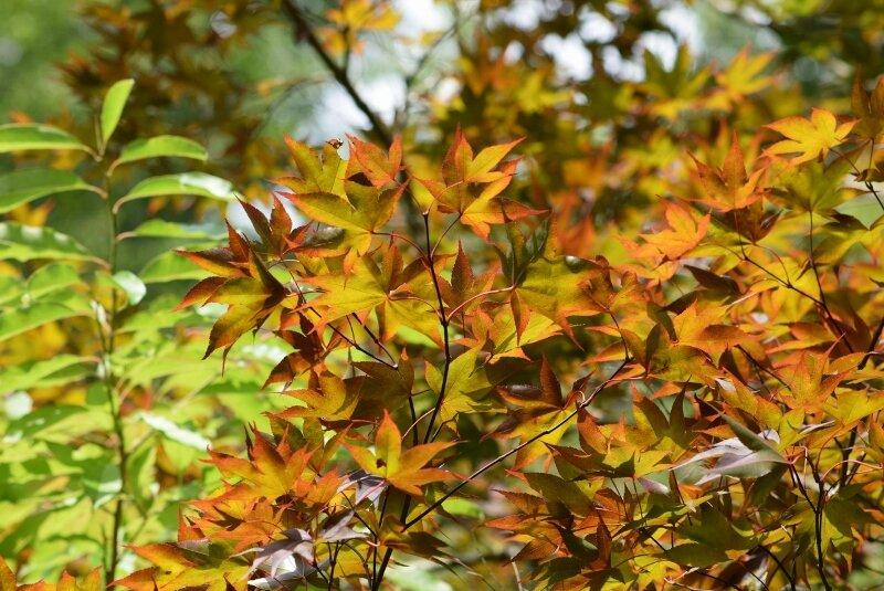 leaves-gibbs-garden-atlanta.jpg