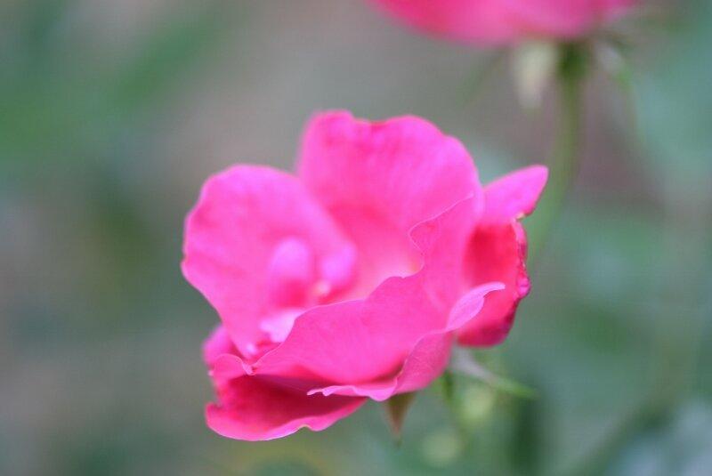 pink-flower-gibbs-garden-atlanta.jpg