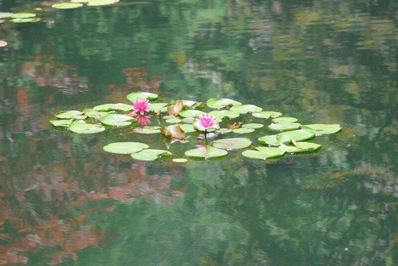 lilypad-gibbs-garden-atlanta.jpg