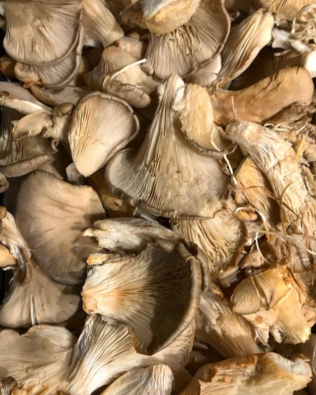 Fungi.  -  #spain #barcelona #food #tapasforbreakfast  (at Barcelona, Spain)