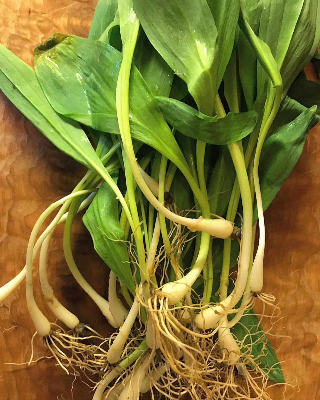 A long ago, secret admirer used to gift me bouquets of cleaned ramps in springtime.  -  #allium #ramps #spring #seductionbyonion (at At Home in Napa)