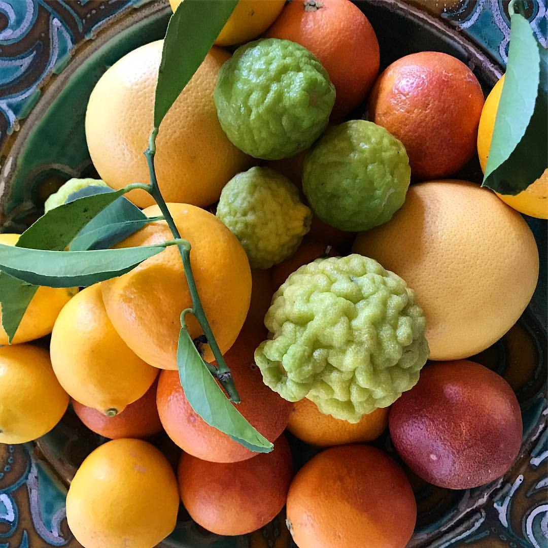 Each and every winter, the citrus produced in California, and in our own backyard, amazes me!    -