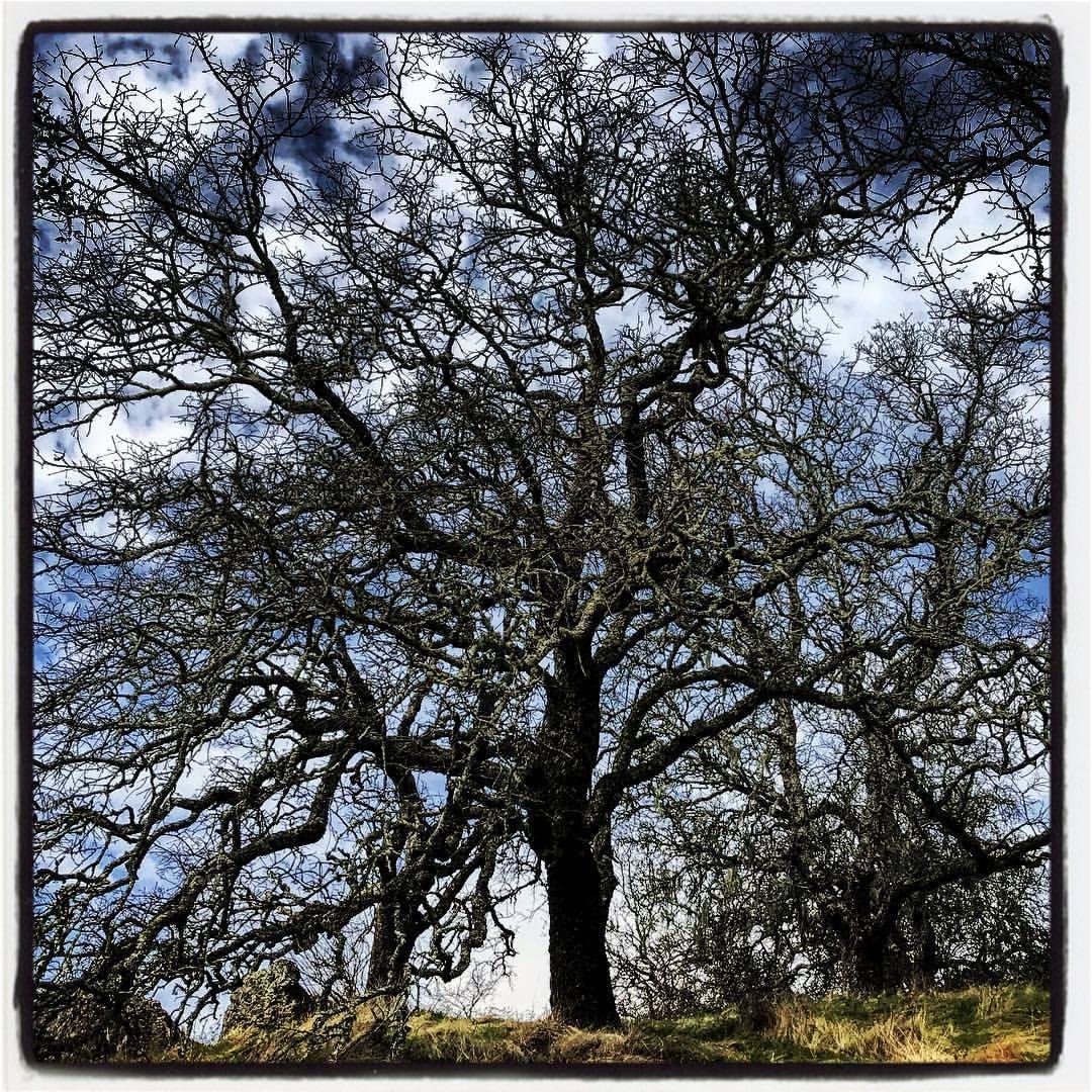 January in Calistoga.  -  #california #ilovecalifornia #napavalley #calistoga  (at Robert Louis Stevenson State Park)