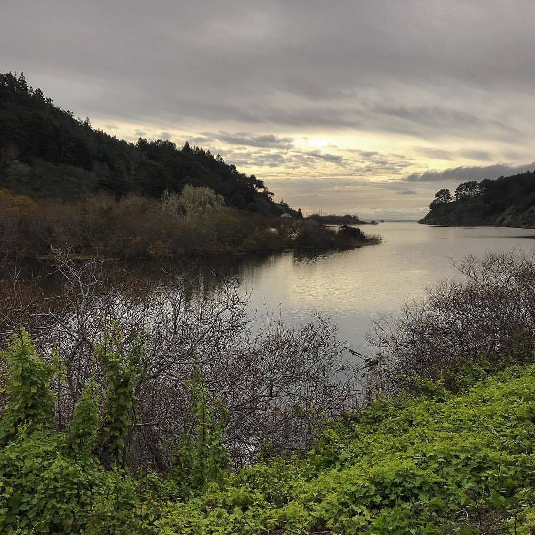 Winter light  reflected  refracted   flowing   emanating   from the Navarro River,  snaking northwest   from the Coastal Range  to the Pacific,  the fog and mist  a thoughtful gray  contrasting  my mindless ebullience.  -  #california #ilovecalifornia #mendocino #nature   (at Mendocino Coast)