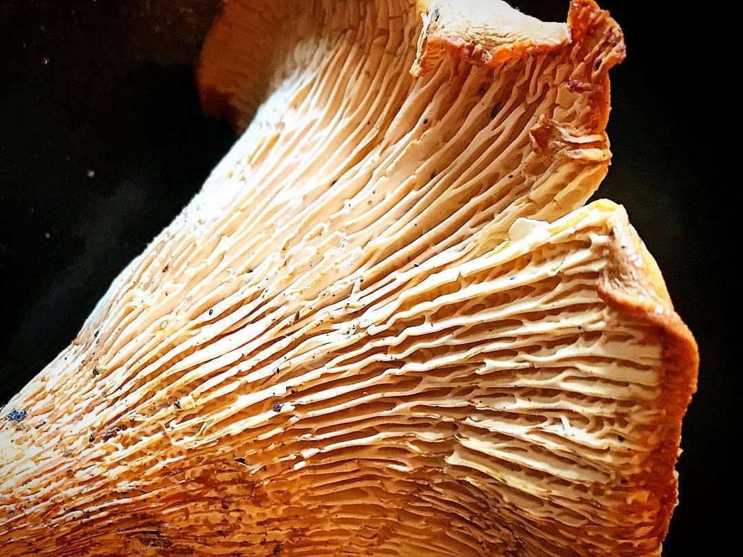 Chanterelle 🍄   -  #mushrooms #forage #fungi #california  (at Mendocino Coast)