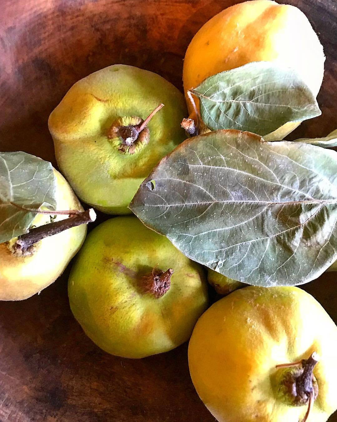 Quince.  -  #fruit #seasonal #quince #quincepaste  (at At Home in Napa)