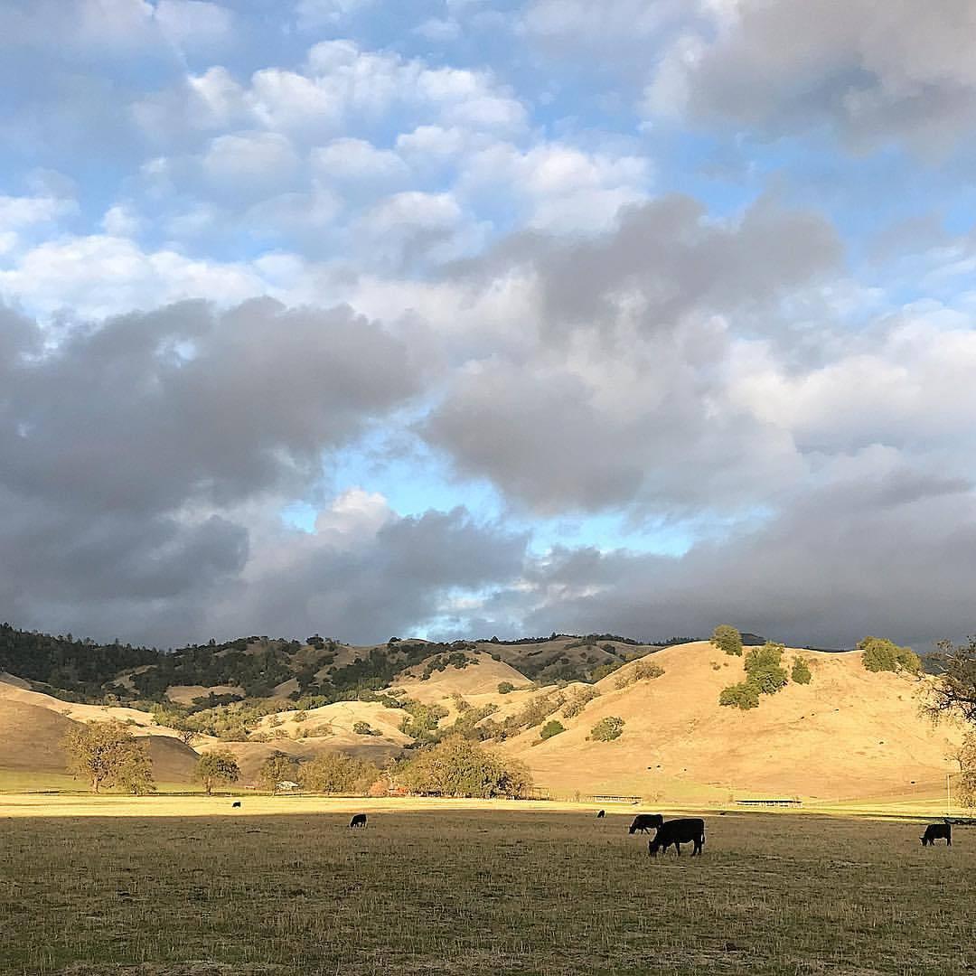 #ilovecalifornia  (at Calistoga, California)