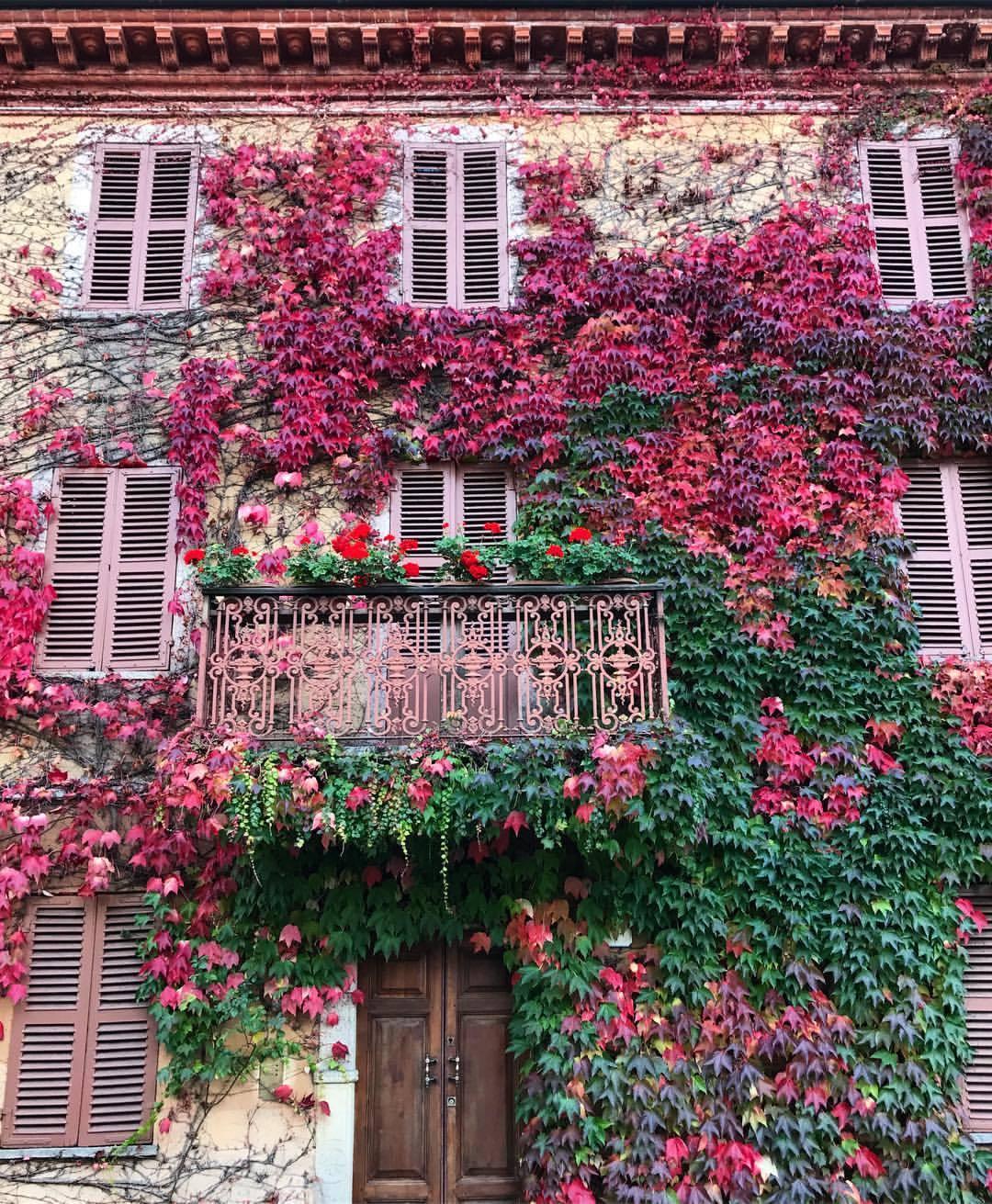 Autumn frosting.  -  #autumn #fall  (at Bossolasco)