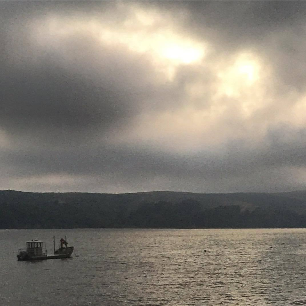 Oh to be an oysterman!  Foggy dawns,  cold fingertips,  wet socks,  knife on the hip,  bivalves on the table;  shiny seal pates  puncturing the bay's stillness  with snorting exhales;  smiling pelicans,  beseeching gulls,  preening loons,  manic mures,  and thousands of egrets   dotting sandbars   like oversized pearls on a  Marin housewife's necklace;  black ducks  wings spread towards their Mecca,  absolving themselves   of the inherent nature  of their wetness.  -  #california #westmarin #birds #tomalesbay  (at Point Reyes National Seashore)