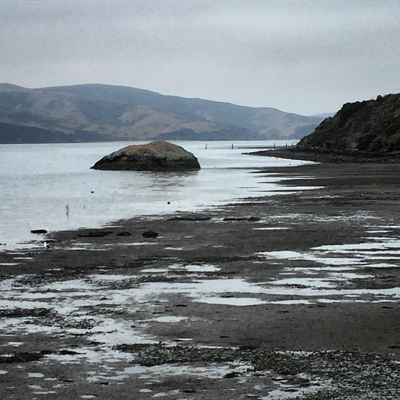 Low tide on Tomales Bay.  #california #westmarin #nevergetsold  (at Point Reyes National Seashore)