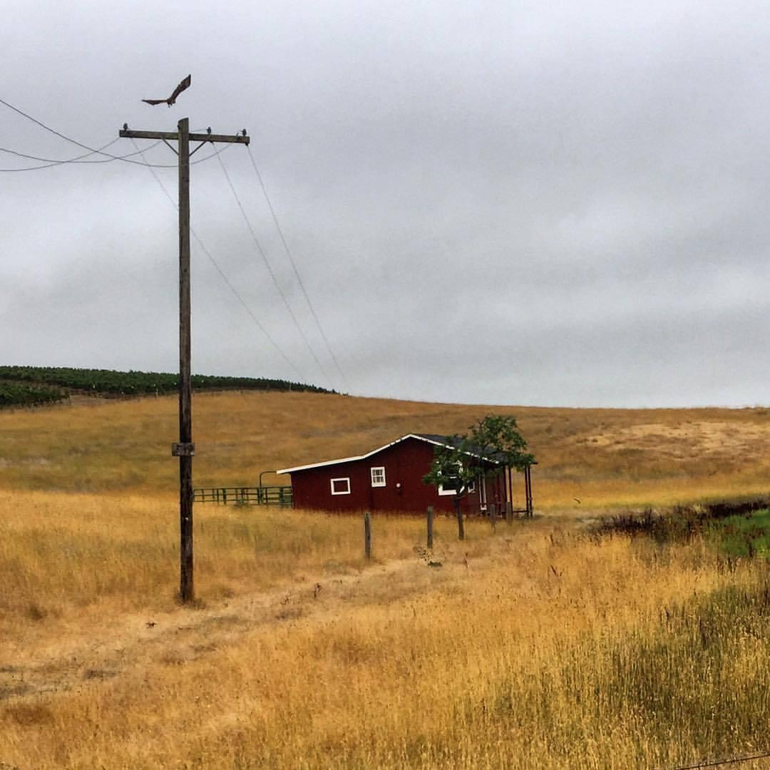 Gray morning.  -  #california #napa #cabinporn  (at Carneros, California)