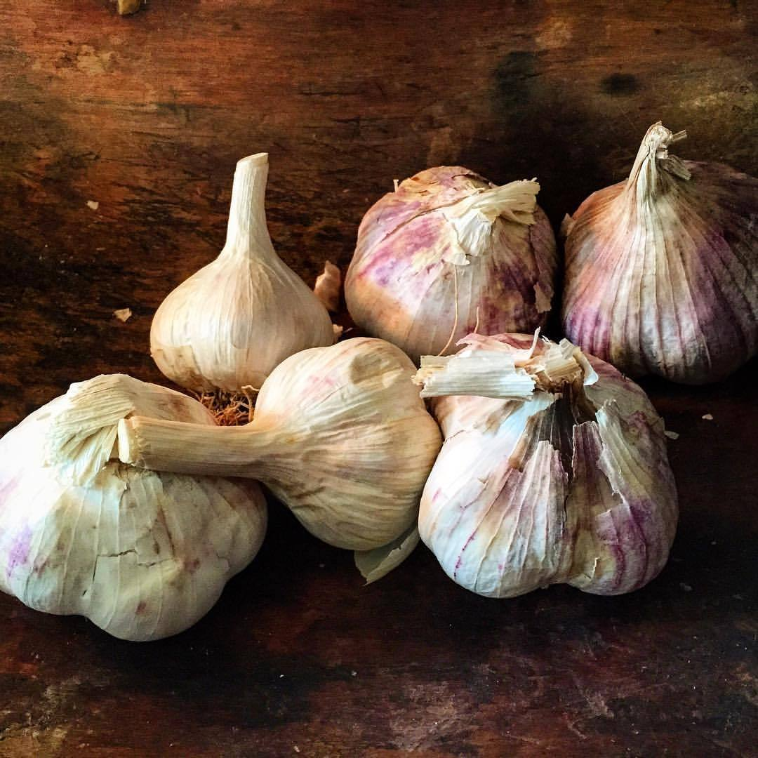 I'm on the hunt to rent/trade/lease a small plot of land (anywhere from 40' x 40' to 100' x 100') in the Napa area to raise and experiment with different varieties of allium, most specifically garlic.     Organic/natural land is sought and fencing and drip irrigation is a plus.    Would need to ready the land in September for October planting.    Harvest is early summer (depending upon variety).  Any leads, ideas and offers are greatly appreciated.     (at At Home in Napa)