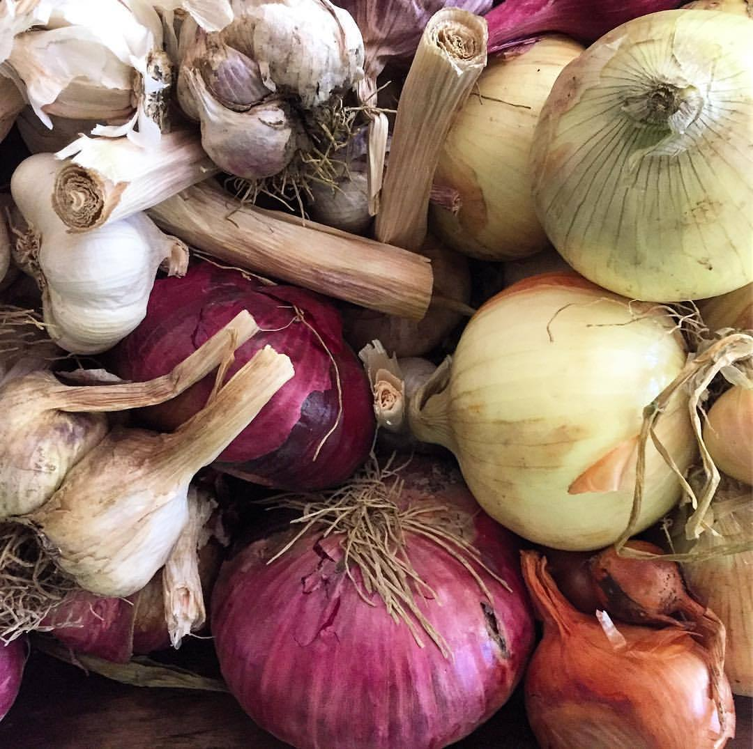 Allium trove.  #garlicislife #allium #healthyfood  (at At Home in Napa)