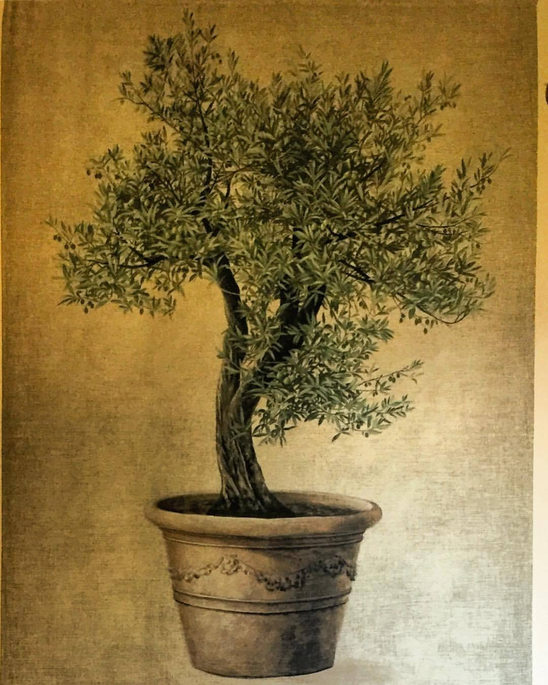 Extending the olive branch.  -  #coexist #planetearth #onlygameintown