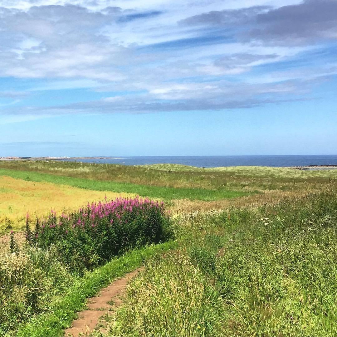 Welcome sunshine.  #england #uk #walkingholiday  (at Beadnell, Northumberland)