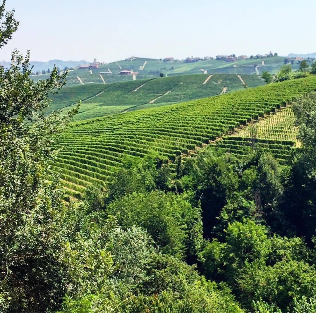 Barolo.  #italy #piedmont #vineyard    (at Enoteca Regionale Del Barolo)