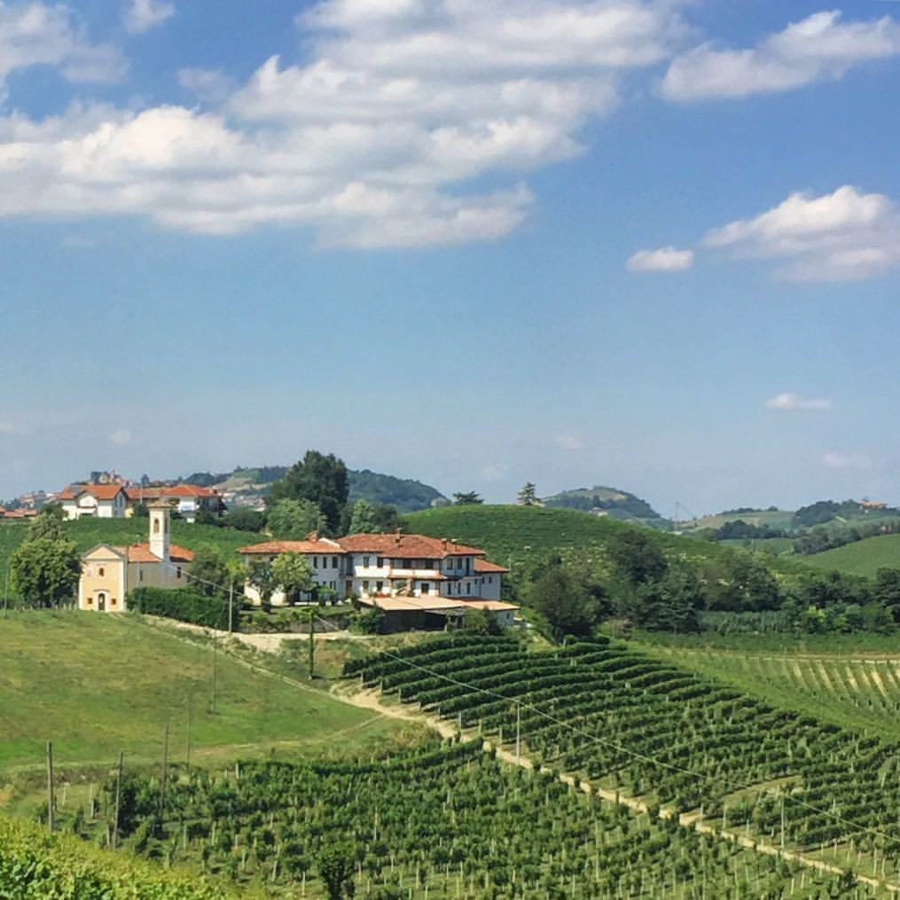 Dolcetto vineyards.  #italy #piedmont #vineyard  (at Castello di Serralunga d'Alba)
