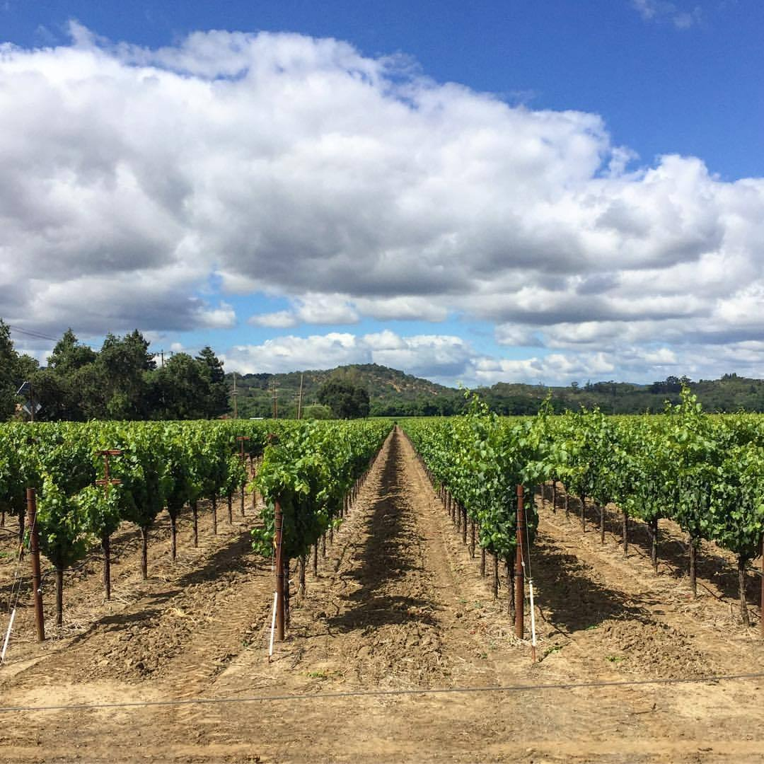 Alexander Valley.  #california #sonoma #vineyard  (at Geyserville, California)