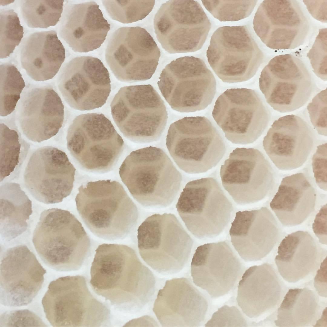 Superorganism, indeed.    #mindblown #napavalleybeeco   #beekeeping #bee #backyardbeekeeping  (at At Home in Napa)